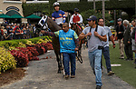 DEL MAR, CA  SEPTEMBER 3: #12 Connie Swingle, ridden by Geovanni Franco, in the paddock before the Generous Portion Stakes on September 3, 2021 at Del Mar Thoroughbred Club in Del Mar, CA.  (Photo by Casey Phillips/Eclipse Sportswire/CSM)