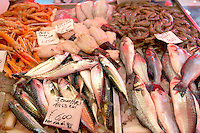 Fresh Sea Food & Fish - Bass, Macrel, Prawns - Chioggia - Venice Italy