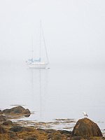 """Early morning fog lifting in Gloucester Ma. A boat, a bird and the morning fog combining in a visual poem.<br /> Printed 20x30"""" mounted, matted, and professionally framed. Artist signed. limited edition.<br /> Price  $650 plus shipping<br /> Price"""