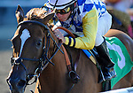 10 September 19: Evangelical (no. 5), ridden by Mike Luzzi and trained by Barclay Tagg, wins a maiden race for two year old fillies before the running of the grade 3 Noble Damsel Stakes at Belmont Park in Elmont, New York.  (Bob Mayberger/Eclipse Sportswire)