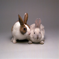 Portrait of rabbits