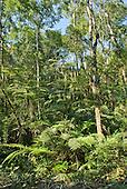 Fazenda Bauplatz, Parana State, Brazil. Mata Atlantica rain forest.
