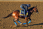 November 4, 2020: Maximum Security, trained by trainer Bob Baffert, exercises in preparation for the Breeders' Cup Classic at Keeneland Racetrack in Lexington, Kentucky on November 4, 2020. John Voorhees/Eclipse Sportswire/Breeders Cup/CSM