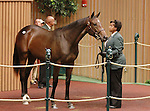 September 10, 2014: Hip #386 Bernardini - West Side Dancer filly consigned by Hidden Brook sold for $425,000 at the Keeneland September Yearling Sale.   Candice Chavez/ESW/CSM