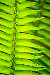 close up of green fern leaf