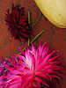 Dahlia & Squash<br /> <br /> Stock Photo by Paddy Bergin