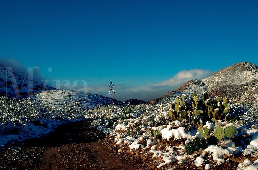 A winter snow scene in the Dos Cabezas Mountains with a Prickly Pear Cactus (Opuntia) on the right and fog drifting into the distant Sulphur Springs Valley. Arizona.