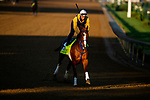 April 26, 2021: King Fury gallops in preparation for the Kentucky Derby at Churchill Downs in Louisville, Kentucky on April 26, 2021. EversEclipse Sportswire/CSM