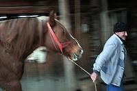 RUMAENIEN, 02.2006, Cirta bei/close to Miercurea-Ciuc. Pferdehaltung auf dem Dorf. Pferde werden bis heute als Nutz- und Zugtiere eingesetzt.   Village horsekeeping. Horses are until today used as productive livestock for work and cart-pulling..© Andreea Tanase/EST&OST.