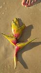 Flowers on Kailua Beach of Oahu, Hawaii.