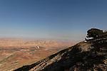 T-030 Kermes Oak on Mount Kabir