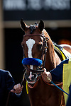 MAR 07: Authentic before the San Felipe Stakes at Santa Anita Park in Arcadia, California on March 7, 2020. Evers/Eclipse Sportswire/CSM