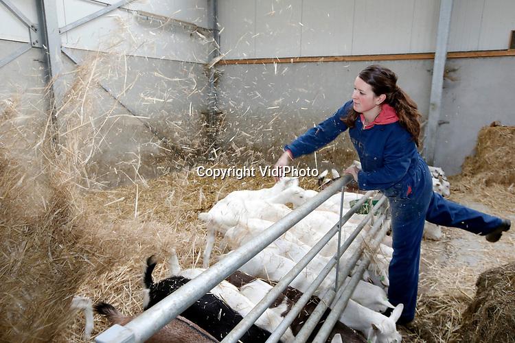 Foto: VidiPhoto<br /> <br /> LUNTEREN – Hulpboerin Judith Hendrikse-van Trierum (28) uit Lunteren is het manusje van alles op boerenbedrijven in de wijde omgeving. Als ZZP'er helpt ze onder andere met voeren van schapen en geiten, melken en het bereiden van kaas. De Lunterse is vooral dol op geiten. In de toekomst hoopt ze een geitenmelkerij te starten of over te nemen.