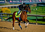 LOUISVILLE, KY - APRIL 29: Dream Baby Dream exercises in preparation for the Kentucky Derby at Churchill Downs on April 29, 2018 in Louisville, Kentucky. (Photo by John Voorhees/Eclipse Sportswire/Getty Images)