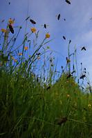 In all weather, bees are intrepid workers. The pollen-gatherers take enormous risks and brave predators and the elements. They wear themselves out working and die after 5 days of incessant flying. ///Par tous les temps, les abeilles sont des travailleuses intrépides. Les butineuses prennent des risques énormes et bravent prédateurs et intempéries. Elles s'épuisent à la tâches en mort après 5 jours de vols incessants.