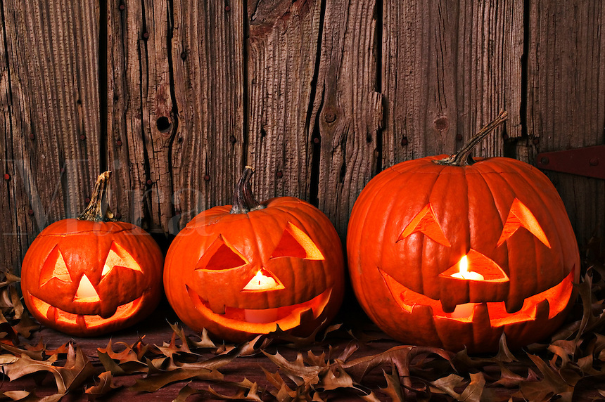 three pumpkins by old wooden fence, Halloween
