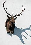 Germany, Bavaria, deer head, woodcraft