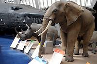 LONDRES-UK-25-05-2013. Elefente y rinoceronte disecados en el Museo de Historia Natural, Londes. Stuffed Elephant and rhino in the Natural History Museum, London. Photo: VizzorImage