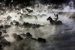 Buffalo being taken to a river to be washed by Ummu Nisan Kandilcioglu