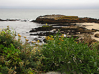 A flurry of green and yellow close by with two casting into the Pacific from the rocks at Pescadero State Beach.