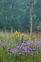 Meadow wildflowers, Mt Cuba Center, Delaware