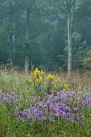 Meadow wildflowers, Mt Cuba Center, Delaware