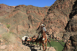 Cowgirl leads a pack mule train up the South Kaibab Trail, above the Black Bridge and the Colorado River, near Phantom Ranch Campground, Grand Canyon National Park, Arizona. . John offers private photo tours in Grand Canyon National Park and throughout Arizona, Utah and Colorado. Year-round.