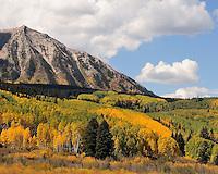 Aspens in Fall in Colorado