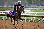 DEL MAR, CA - OCTOBER 30: Madeline, owned by Godolphin Stable Lessee & Sheikh Mohammed Obaid Al Maktoum and trained by Roger Varian, exercises in preparation for Breeders' Cup Juvenile Fillies Turf at Del Mar Thoroughbred Club on {mothname} 30, 2017 in Del Mar, California. (Photo by Scott Serio/Eclipse Sportswire/Breeders Cup)