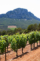 Domaine de l'Hortus. The Pic St Loup mountain top peak. Pic St Loup. Languedoc. Mourvedre vines facing south. France. Europe. Vineyard.