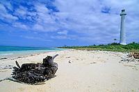 Bird sitting on the white sand beach looking toward the lighthouse, Amedee Island, Noumea Lagoon, New Caledonia.