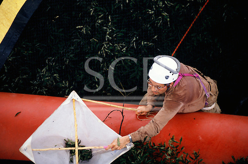 Makande, Gabon. Entomologist Henri-Pierre Aberlenc collcting samples on the Canopy Sledge from the rainforest.