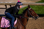APRIL 29, 2015: Puca, trained by Bill Mott, exercises in preparation for the 141st Kentucky Oaks at Churchill Downs in Louisville, Kentucky. Jon Durr/ESW/Cal Sport Media