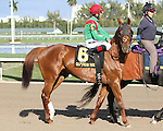 """Animal Kingdom in the 30th running of the Kitten's Joy Gulfstream Turf Handicap (Grade 1) for 4-year olds & up, going 1 1/8 mile on the turf, at Gulfstream Park.  Trainer Claude """"Shug"""" McGaughey III.  Owner Phipps Stable"""