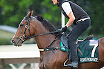 SHA TIN,HONG KONG-APRIL 29: Rising Romance,trained by David Hayes,exercises in preparation for the Champions Mile at Sha Tin Racecourse on April 29,2016 in Sha Tin,New Territories,Hong Kong (Photo by Kaz Ishida/Eclipse Sportswire/Getty Images)