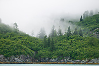 Morning fog hovers over the forest along the shores of Glacier Bay National Park, Alaska