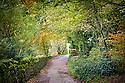 Lane running through woodland, Birchover, Peak District NAtional Park, UK.
