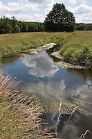 Naturnaher Wiesenbach, Wiesen - Bach mit üppiger Ufervegetation, Hochstaudenflur, bewachsen mit Flutendem Wasser-Hahnenfuß, Wasserhahnenfuß, Wasser - Hahnenfuß, Ranunculus fluitans.