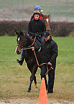 Elusive Kate, trained by Jean-Claude Rouget and to be ridden by Christophe Lemaire , exercises in preparation for the 2011 Breeders' Cup at Churchill Downs on November 4, 2011.