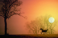 Horse silhouetted running against orange sky