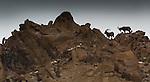 Siberian or Asiatic ibex (Capra sibirica), Hemis National Park, Ladakh, India