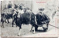Europe/France/Poitou-Charentes/65/Hautes-Pyrénées: Vieille carte postale représentant un chevrier et son troupeau
