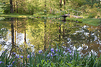 Dappled morning sunlight reflecting across pond in woodland garden, environmentally-responsible, native plant sustainable garden, Mt Cuba Center Delaware
