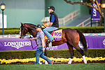 OCT 27: Breeders' Cup Classic entrant War of Will, trained by Mark E. Casse, at Santa Anita Park in Arcadia, California on Oct 27, 2019. Evers/Eclipse Sportswire/Breeders' Cup