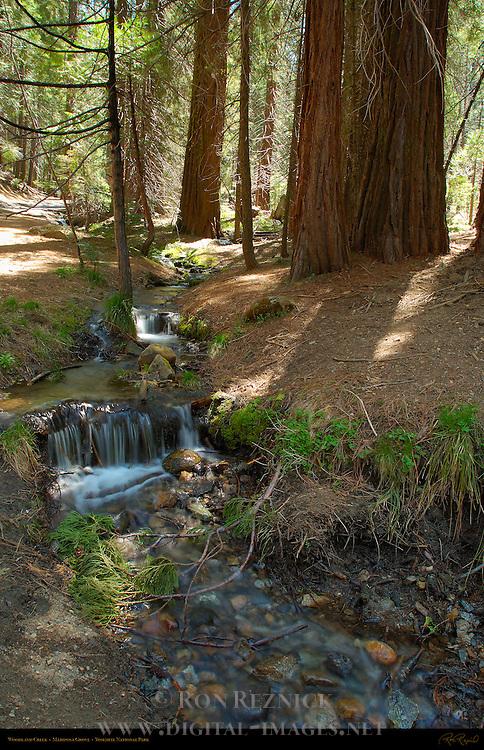 Woodland Creek, Mariposa Grove of Giant Sequoias, Yosemite National Park