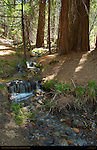 Woodland Creek, Mariposa Grove of Giant Sequoias, Yosemite National Park