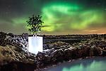 Bloom Iceland 2015