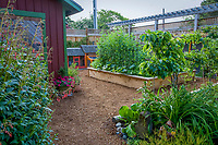 wood chip mulched paths around backyard raised bed vegetable organic garden and shed