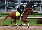 LOUISVILLE, KY -APR 25: Kentucky Derby hopeful Hofburg trains for the Kentucky Derby at Churchill Downs, Louisville, Kentucky. (Photo by Mary M. Meek/Eclipse Sportswire/Getty Images)