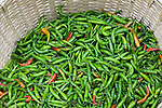 Peppers, Paro Valley, Bhutan